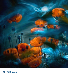 This image was found, unattributed, on an Instagram feed. The original photographer is  Magdalena Wasiczek. http://www.popphoto.com/photos/2013/09/behind-photos-magda-wasiczeks-surreal-floralscapes