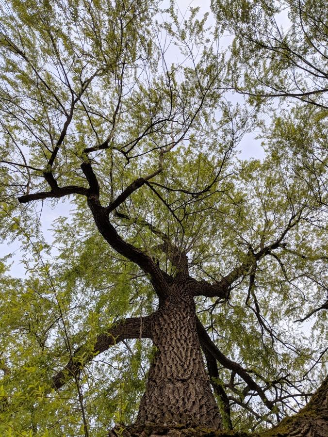 ©Terri-Nakamura_Tree-20180417_190945.jpg